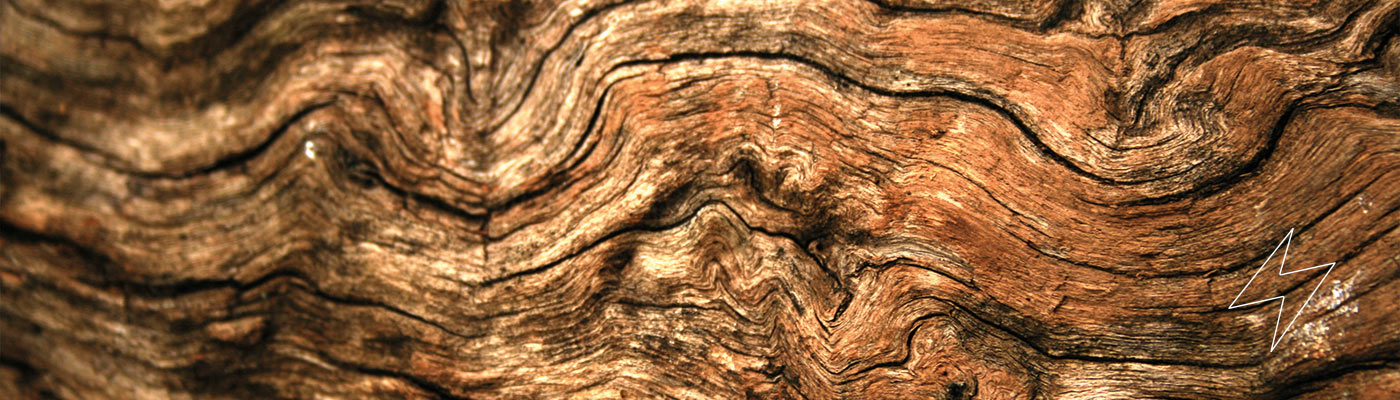 Close up of wood from tree bark